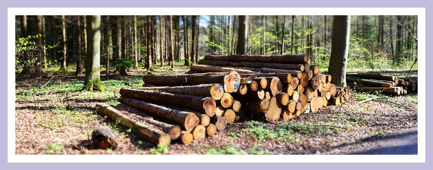 Preissteigerungen Bei Baustoffen Wie Holz